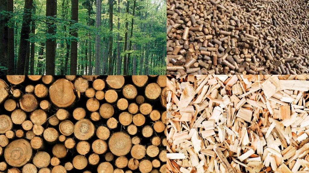 Fotografia biomasse